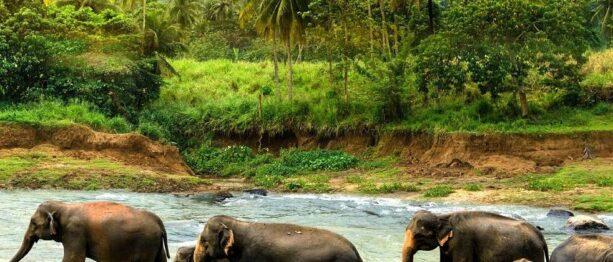 Best Travel Time for Sri Lanka