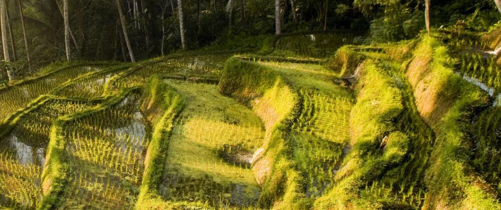 Natural phenomena in Indonesia