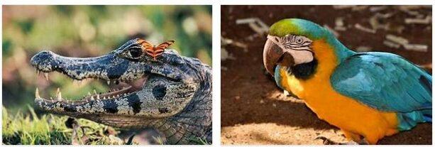 Wildlife in South America